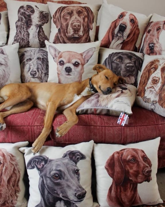 waggydogz cushions larne northern ireland thompsons lighting
